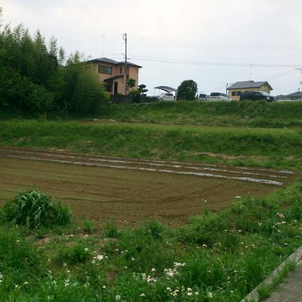 この畑に植えました