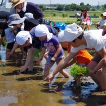 『お米を作ろう!伊勢原2015』田植え体験レポート
