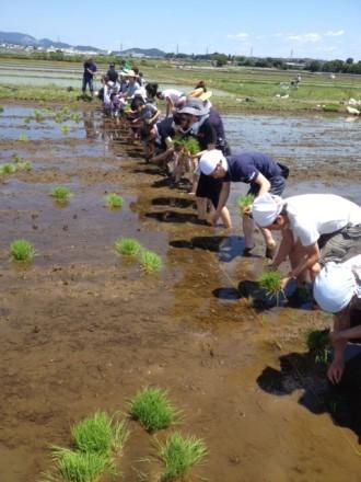 お米を作ろう伊勢原2016開催日決定しました