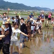 6月7日田植えイベントの様子
