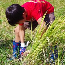 開催します。10月2日稲刈り日和です