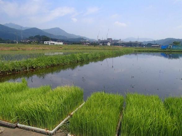 6月3日田植え開催します