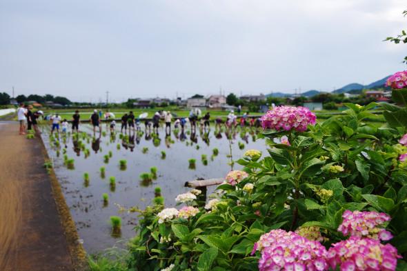 6月5日の田植えは小雨のち晴れでした