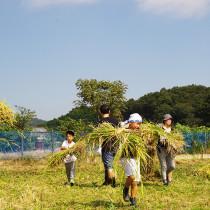 稲刈りイベントレポート『お米を作ろう!伊勢原2016』