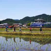 田植え体験レポート『お米を作ろう!伊勢原2017』