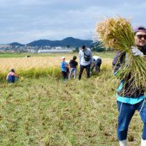 2018年稲刈りイベントレポ