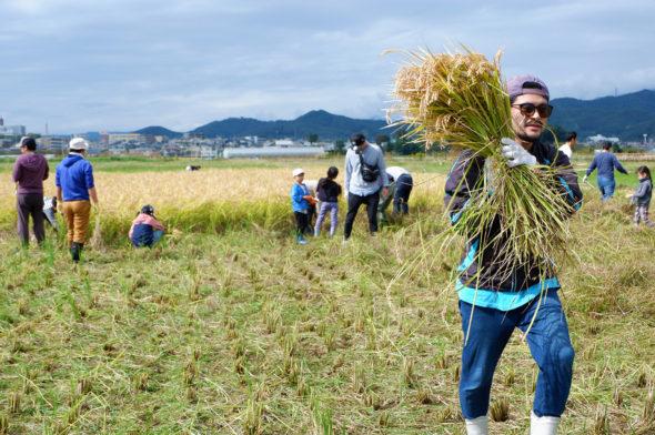 10月13日(日)に稲刈り延期になりました